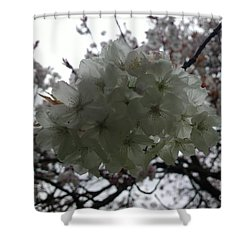 Shower Curtain featuring the photograph Spring by Hanza Turgul