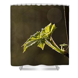 Spring Has Sprung - 365-27 Shower Curtain by Inge Riis McDonald