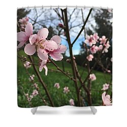 Peach Blossoms Shower Curtain by Nancy Ingersoll