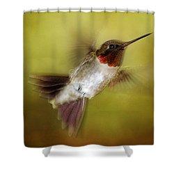 Spring Hummingbird Shower Curtain