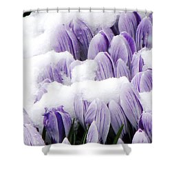 Spring In Hiding Shower Curtain by Angela Davies
