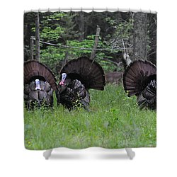 Spring In The Air Shower Curtain by Todd Hostetter