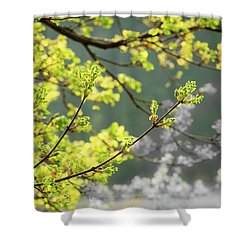 Spring In The Arboretum Shower Curtain