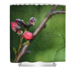 Spring Is Coming  Shower Curtain by Claudia Ellis
