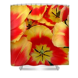 Spring Is Here Shower Curtain