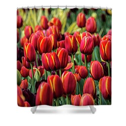 Spring Is Here Shower Curtain by Lisa L Silva