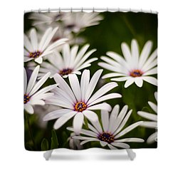 Spring Is In The Air Shower Curtain by Kelly Wade
