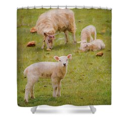 Spring Lamb Shower Curtain