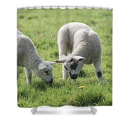 Shower Curtain featuring the photograph Spring Lambs by Scott Carruthers