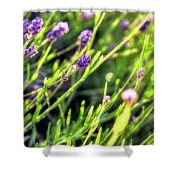 Shower Curtain featuring the photograph Spring Lavender by Jerry Sodorff