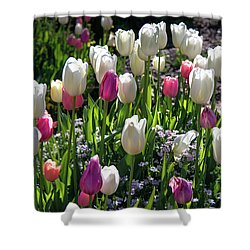 Spring Shower Curtain by Lisa L Silva