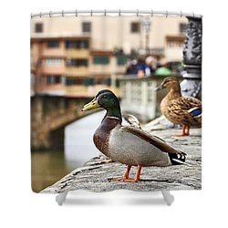 Spring Love Ducks Shower Curtain