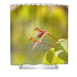 Shower Curtain featuring the photograph Spring Macro2 by Jeff Burgess
