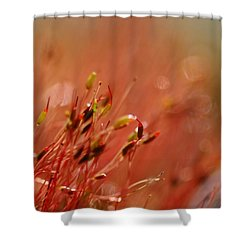Shower Curtain featuring the photograph Spring Macro3 by Jeff Burgess