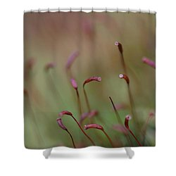 Shower Curtain featuring the photograph Spring Macro5 by Jeff Burgess