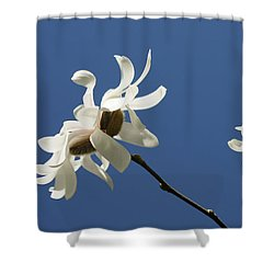 Spring Magnolias Shower Curtain by Haleh Mahbod