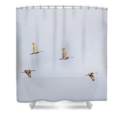 Spring Migration 3 Shower Curtain