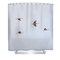 Spring Migration 4 Shower Curtain