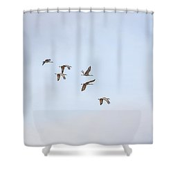 Spring Migration Shower Curtain