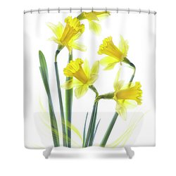 Spring Narcissus Shower Curtain by Jacky Parker