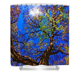 Spring Oak Shower Curtain