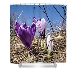 Spring On Bule Shower Curtain