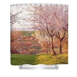 Shower Curtain featuring the photograph Spring Orchard With Morring Sun by Jenny Rainbow