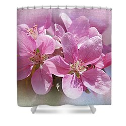 Spring Cherry Blossoms Shower Curtain by Elaine Manley