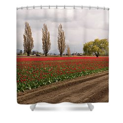 Spring Red Tulip Field Landscape Art Prints Shower Curtain