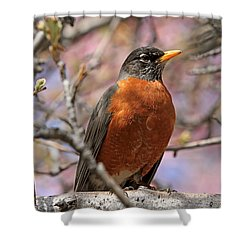 Spring Robin Shower Curtain