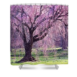 Spring Sensation Shower Curtain