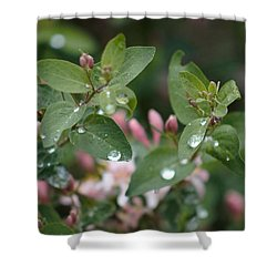 Spring Showers 5 Shower Curtain by Antonio Romero
