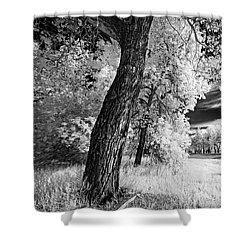 Shower Curtain featuring the photograph Spring Sky by Dan Jurak
