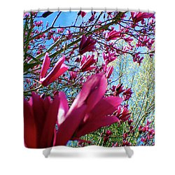 Spring Sky Shower Curtain