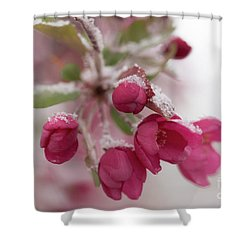 Shower Curtain featuring the photograph Spring Snow by Ana V Ramirez