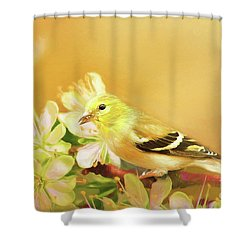 Shower Curtain featuring the photograph Spring Song Bird by Darren Fisher
