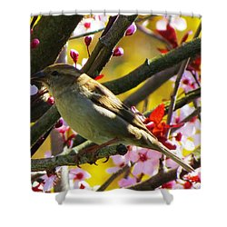 Spring Sparrow Shower Curtain