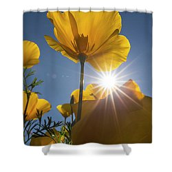 Spring Starburst Shower Curtain by Sue Cullumber