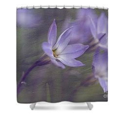 Spring Starflower Shower Curtain by Eva Lechner