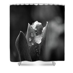 Shower Curtain featuring the photograph Spring Start by Silke Brubaker