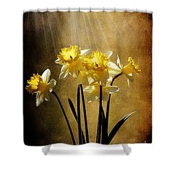 Spring Sun Shower Curtain by Lois Bryan