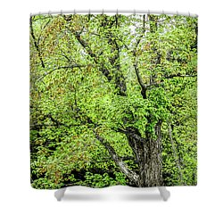 Spring Time By The River Shower Curtain