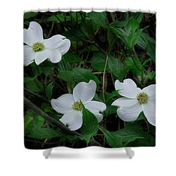 Shower Curtain featuring the photograph Spring Time Dogwood by Mike Eingle