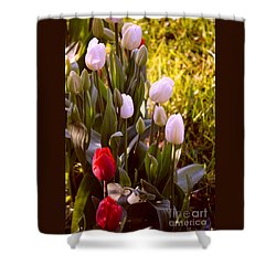 Shower Curtain featuring the photograph Spring Time Tulips by Susanne Van Hulst