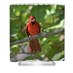 Spring Training Cardinal Shower Curtain