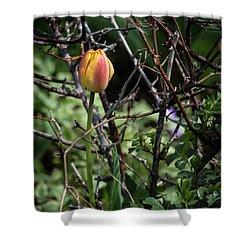Spring Tulip Bud Shower Curtain