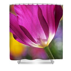 Spring Tulip Shower Curtain by Rona Black