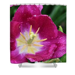 Spring Tulips 47 Shower Curtain by Pamela Critchlow