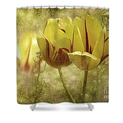 Spring Tulips Shower Curtain by Elaine Manley