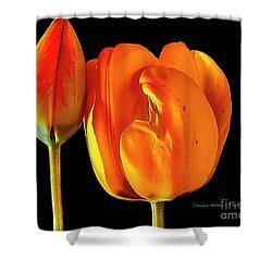 Spring Tulips V Shower Curtain
